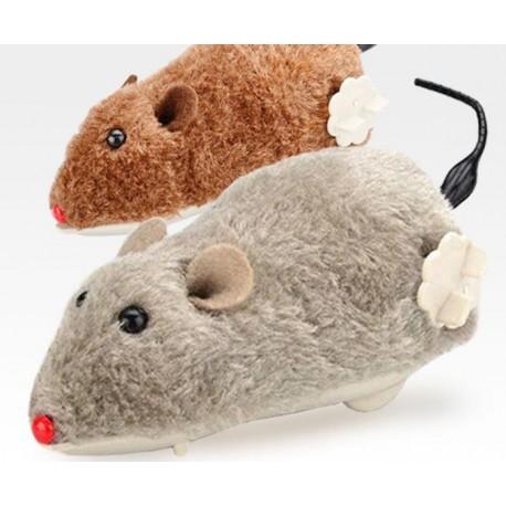 Prisukama pelė katei