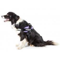 Julius K9 petnešos vidutinio dydžio šunims, skirtingų dydžių ir spalvų